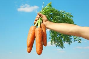 Carrot shutterstock_513320140-w