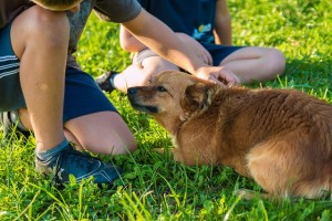 How Dogs Help People Get Along Better
